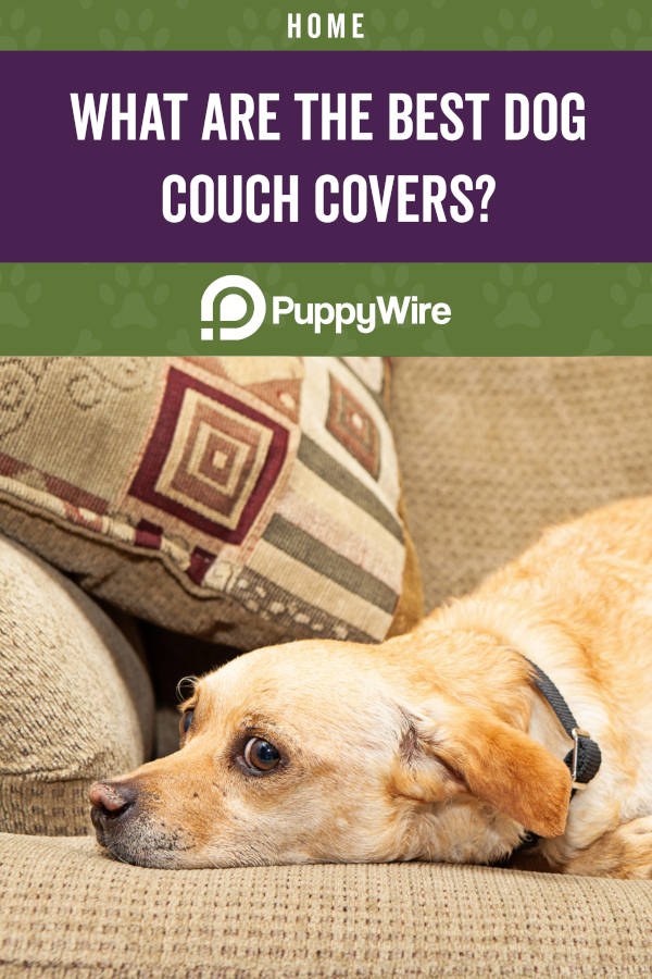 What are the Best Dog Couch Covers?