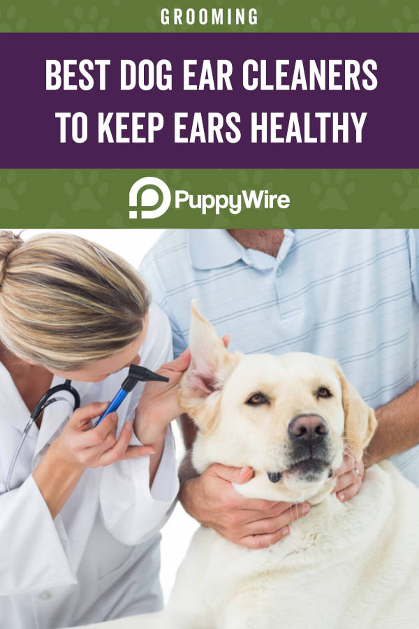 Best Dog Ear Cleaners to Keep Ears Healthy