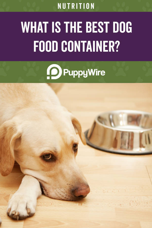 What is the best dog food container?