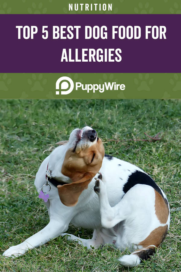 Top 5 Best Dog Food for Allergies
