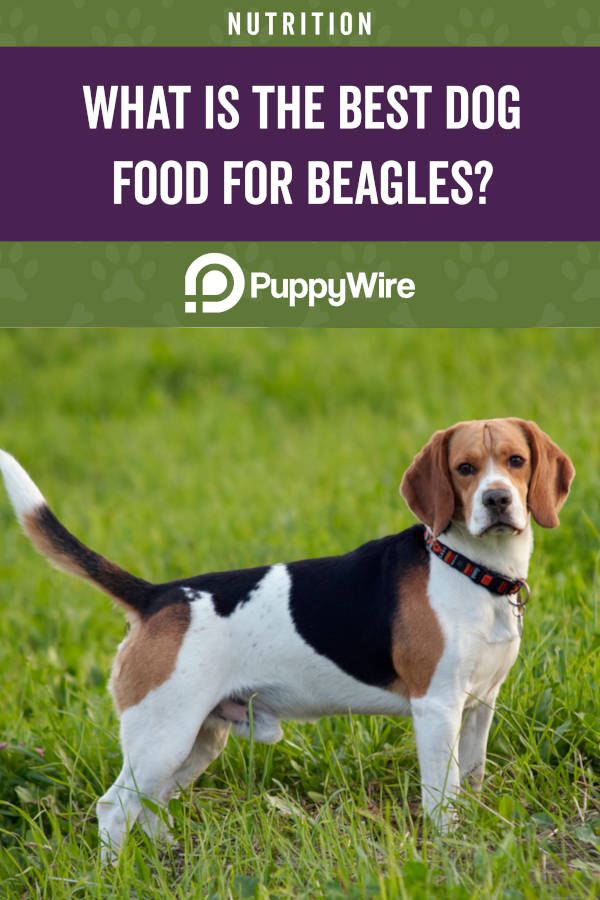 What is the best dog food for beagles?