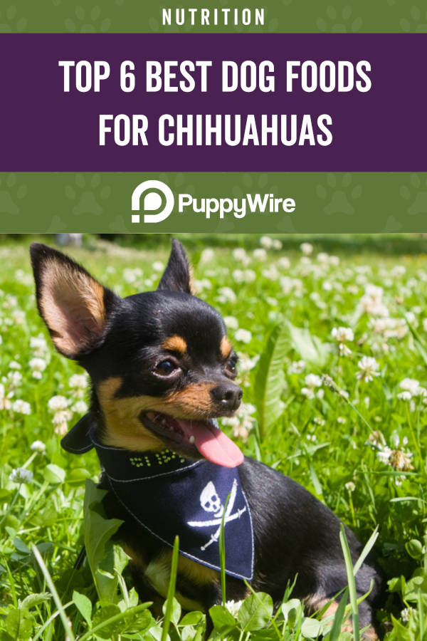 Top 6 Best Dog Foods for Chihuahuas