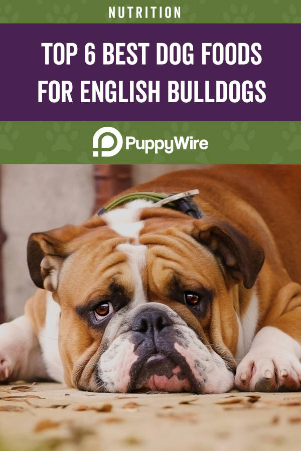 Top 6 Best Foods for English Bulldogs