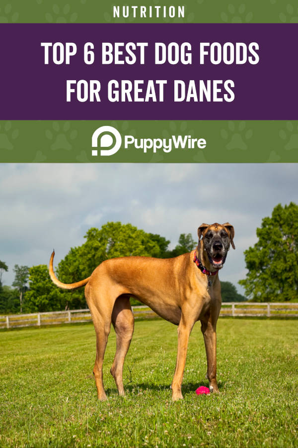 Top 6 Best Dog Foods for Great Danes
