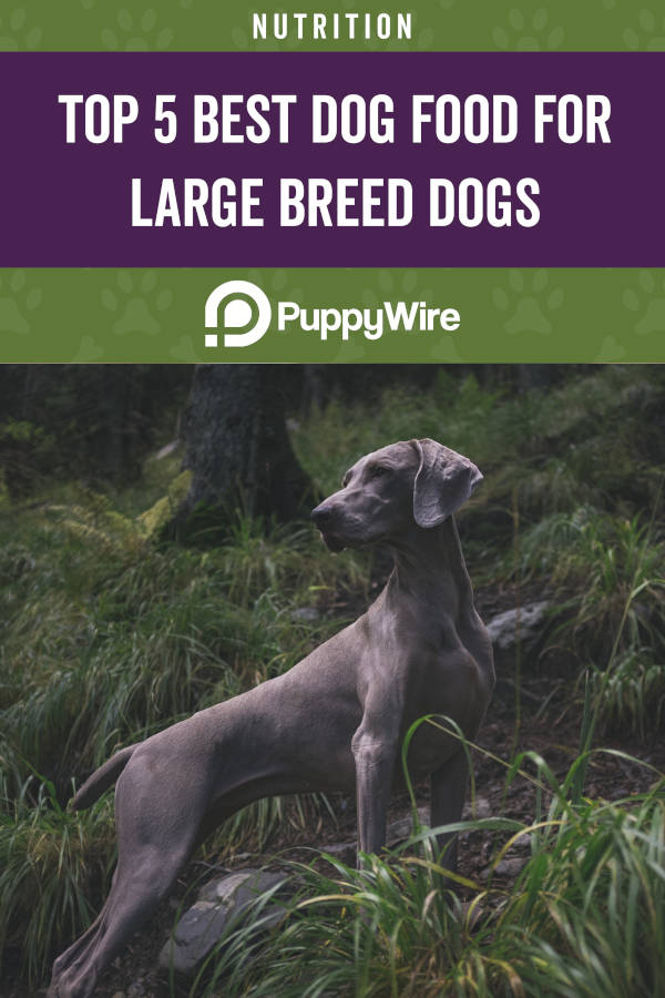Top 5 Best Dog Foods for Large Breed Dogs