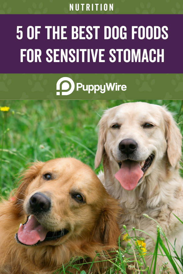 5 of the Best Dog Foods for Sensitive Stomach