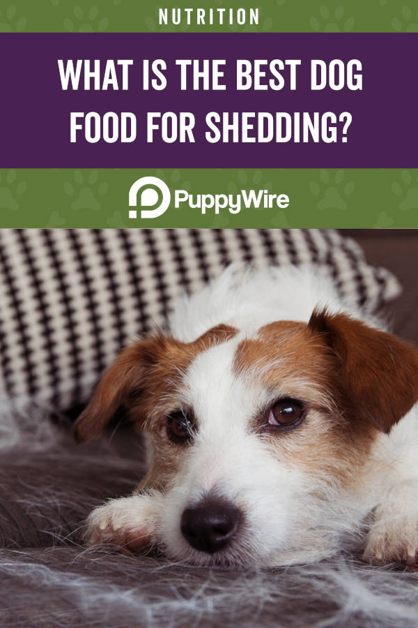 What is the best dog food for shedding?