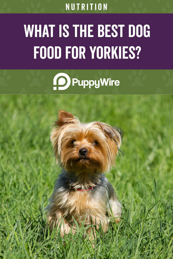 What is the best dog food for yorkies?