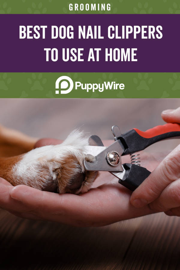 Best Dog Nail Clippers to Use at Home