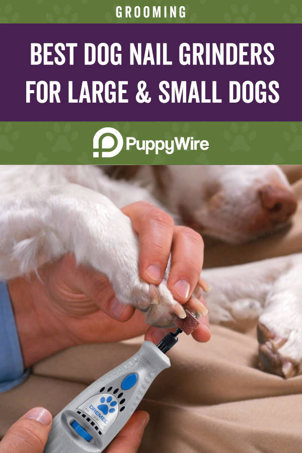 Best Dog Nail Grinders for Large & Small Dogs
