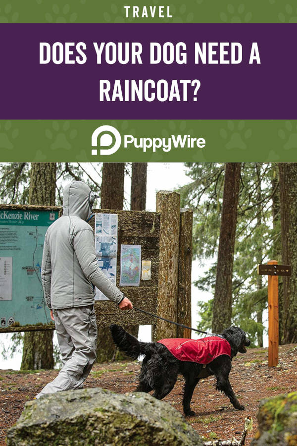 Does your dog need a raincoat?