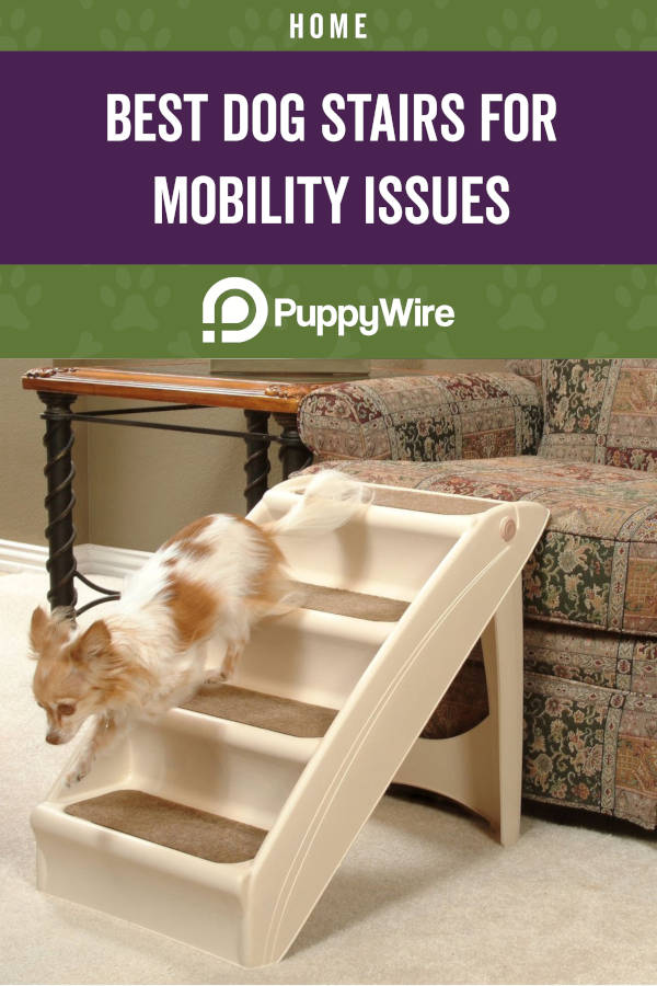 Best Dog Stairs for Mobility Issues