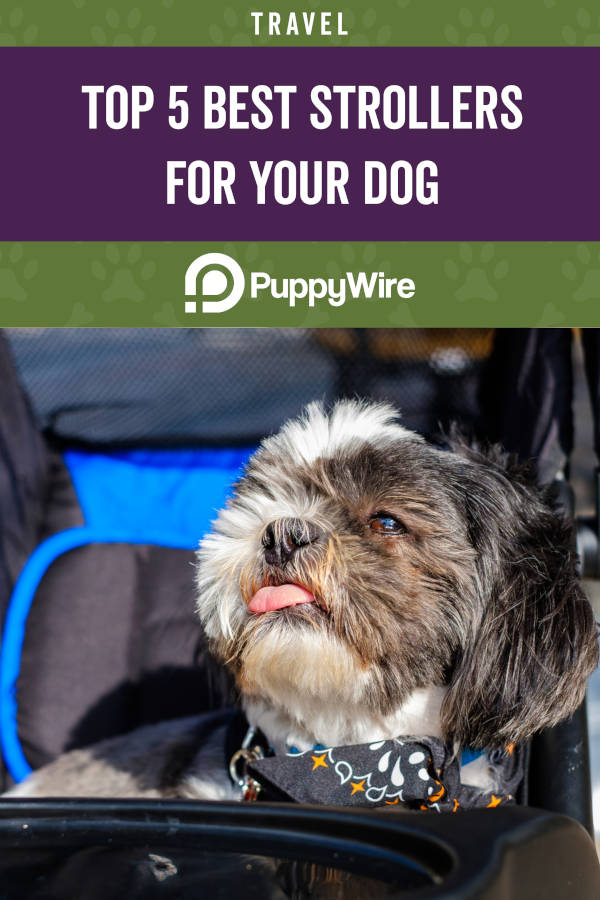 Top 5 Best Strollers for Your Dog