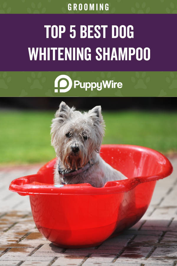 Top 5 Best Dog Whitening Shampoo