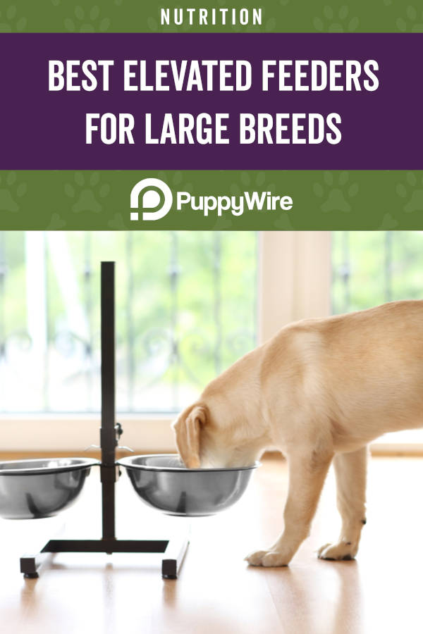 Best Elevated Dog Feeders for Large Breeds