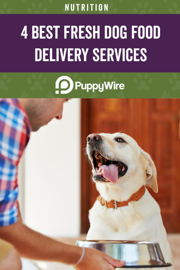 Top 4 Fresh Dog Food Delivery Services for 2020