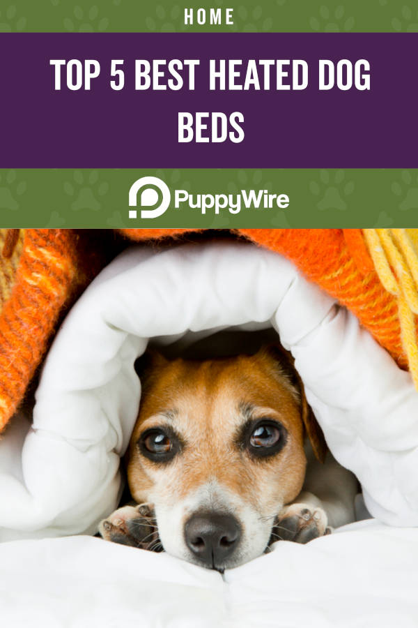 Top 5 Best Heated Dog Beds