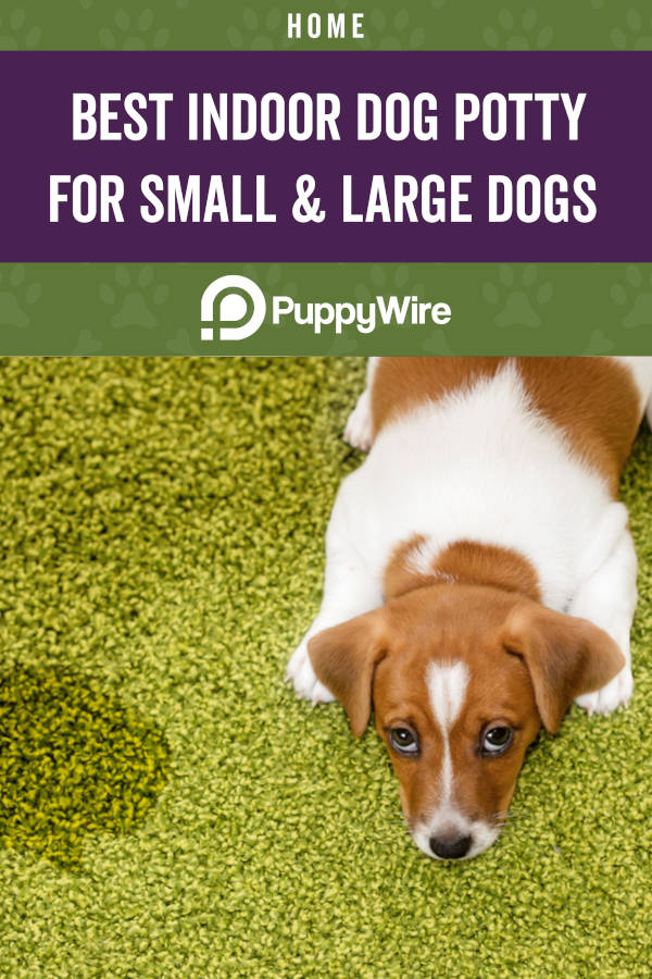 Best Indoor Dog Potty for Small & Large Dogs