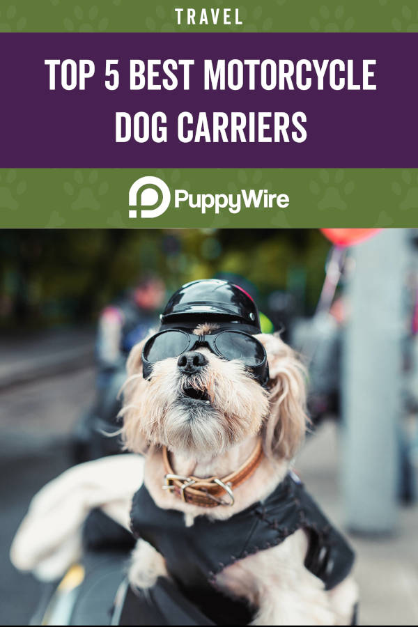 Top 5 Best Motorcycle Dog Carriers