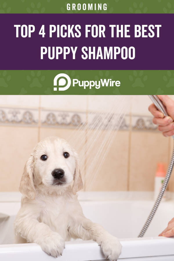 Top 4 Picks for the Best Puppy Shampoo