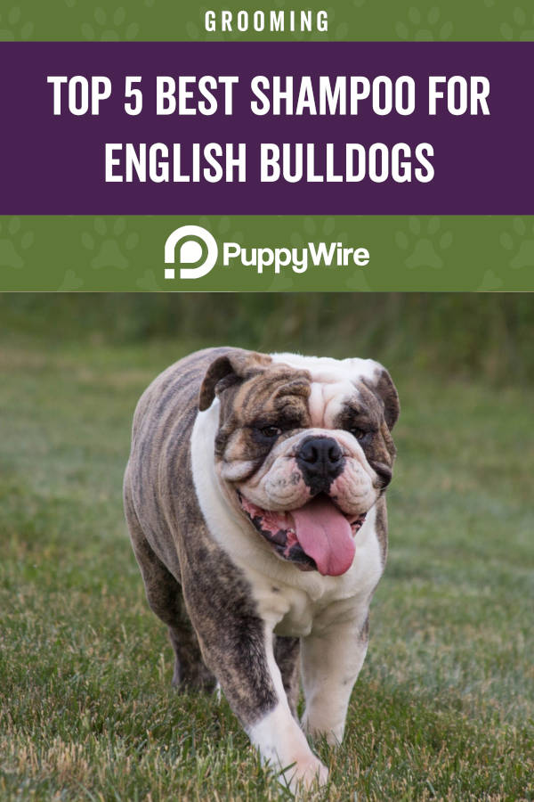 Top 5 Best Shampoo for English Bulldogs