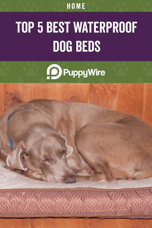 Top 5 Best Waterproof Dog Beds
