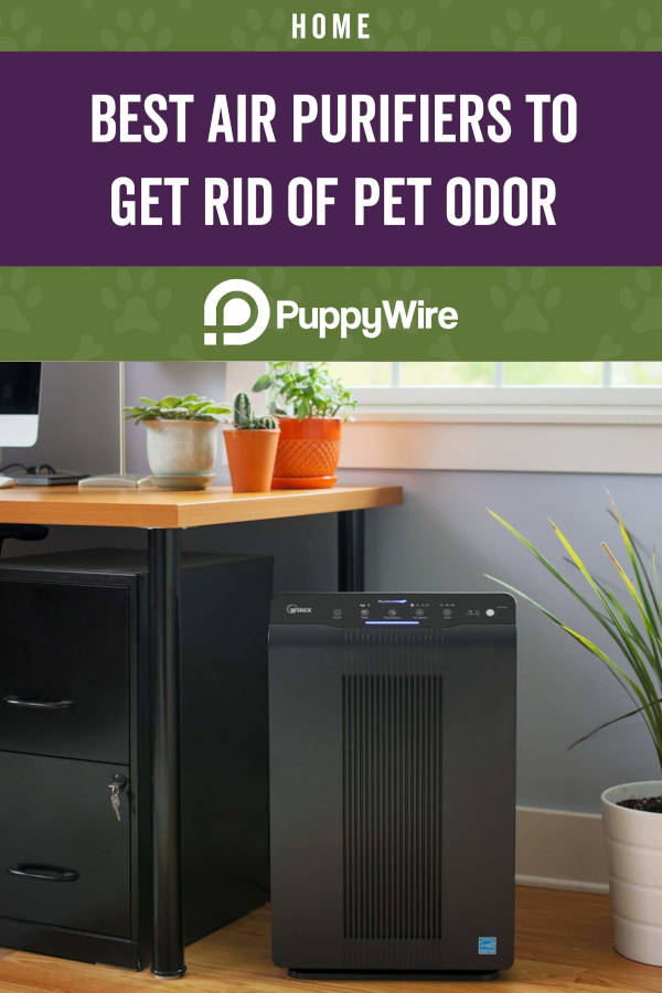 Best Air Purifiers to Get Rid of Pet Odor