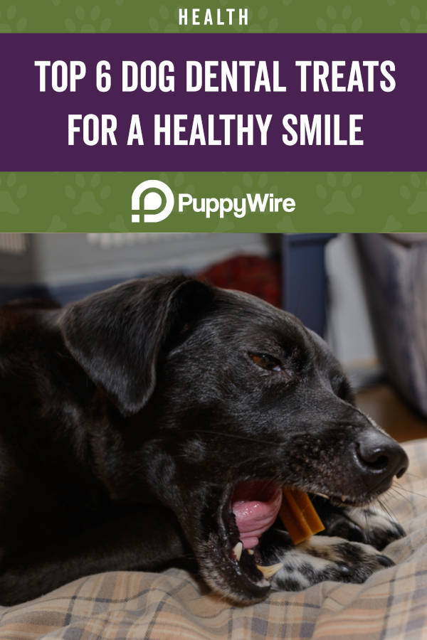 Top 6 Dog Dental Treats for a Healthy Smile