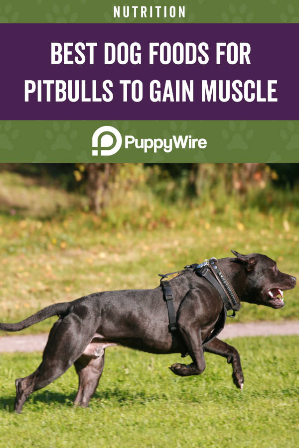 Best Dog Foods for Pitbulls to Gain Muscle