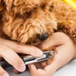 Dog getting nails trimmed